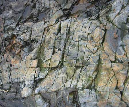 Close up of Maine tidal rock 3