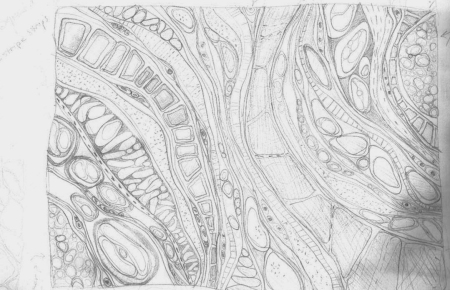 the spaces between VI sketch