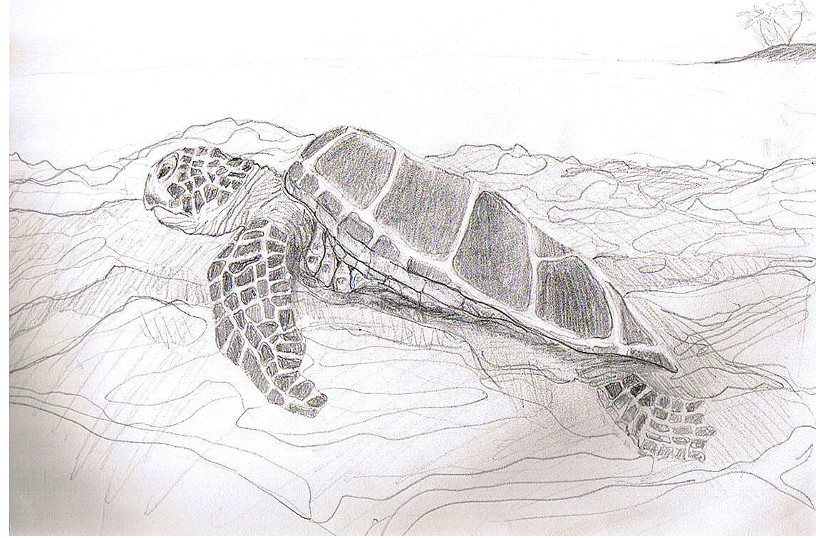 Sea Turtle Sketches http://blog.karenkamenetzky.com/category/uncategorized/