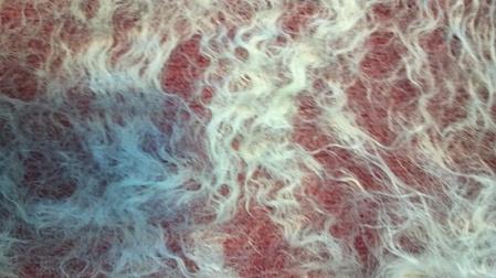 cobweb closeup